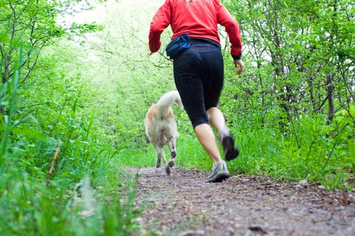 A dog can double up as a personal trainer. Photo: Getty Images.