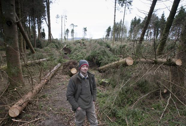 Thomas Cosby stands where about 300 evergreen trees were floored by Storm Darwin at Stradbally Estate, Co. Laois. Photo: Alf Harvey