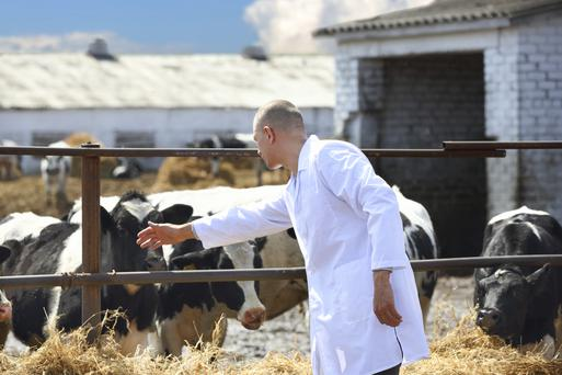 Vets are urging restrictions on the use of antibiotics. Photo: Getty Images.