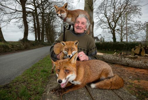 Patsy Gibbons from Colmcille, Thomastown, Co Kilkenny, with his foxes Grainne (on his shoulder) Minnie (centre) and Henry (front). Picture: Dylan Vaughan.