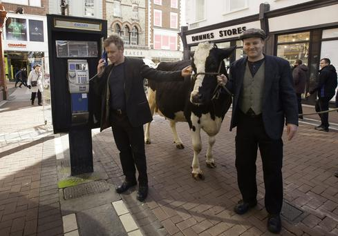 Damian Kearney & Stephen Jones with Rhonda the cow Photo: Gareth Chaney Collins