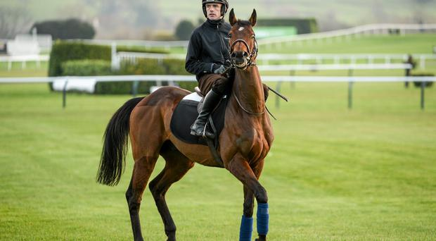 Hurricane Fly, with Ruby Walsh up, on the gallops at Prestbury Park yesterday