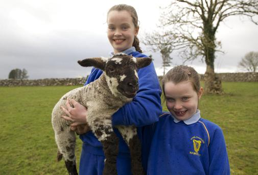 Shauna Tierney aged 11 and her sister Emily aged 6 with their 1 week old ewe lamb which weighed 18lbs at birth on the family farm at Roundfort
