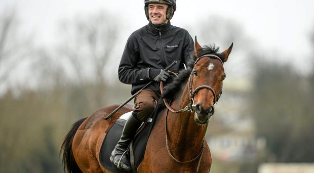Hurricane Fly, with Ruby Walsh up, on the gallops at Cheltenham yesterday