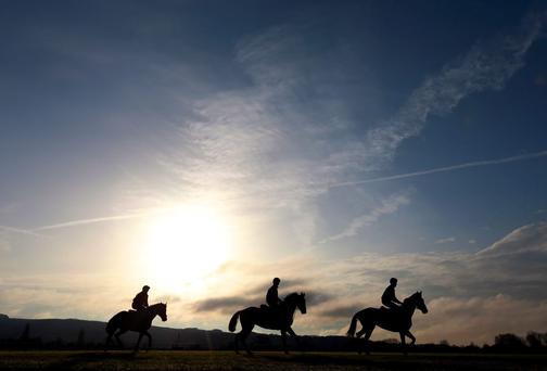 Horses from Gordon Elliott's stable exercise on the gallops at Cheltenham