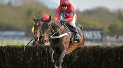 Sprinter Sacre will miss today's Queen Mother Champion Chase