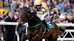 Ruby Walsh riding Briar Hill storm up the hill in last year's Cheltenham Bumper