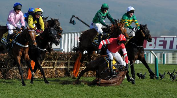 Ruby Walsh broke his arm after this fall on Abbyssial during the JCB Triumph Hurdle at Cheltenham
