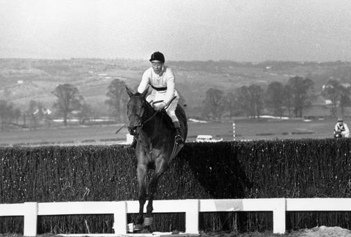 Arkle takes the final fence to win the Gold Cup at Cheltenham in 1965 with jockey Pat Taffe