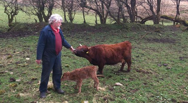 Farmer Henry Judge with both cows