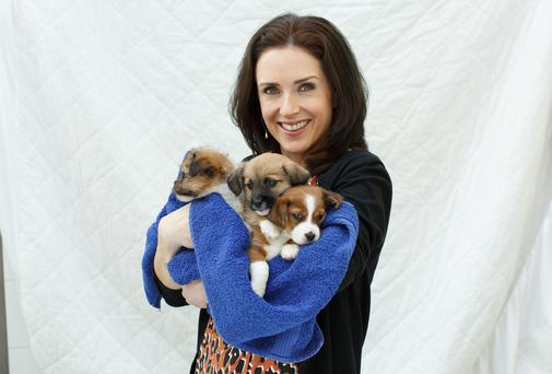 Maia Dunphy with terrier puppies