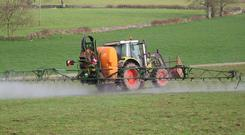 Spraying may need to be carried out soon.