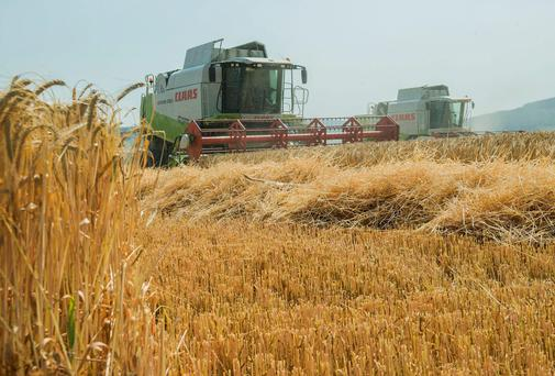 Winter barley being harvested. Photo: O'Gorman Photography.