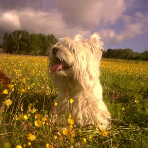 Bailey in a field of buttercups in Coolmine, Saggart. Sent via contact@independent.ie