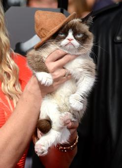 'Grumpy Cat' arriving at The MTV Movie Awards 2014