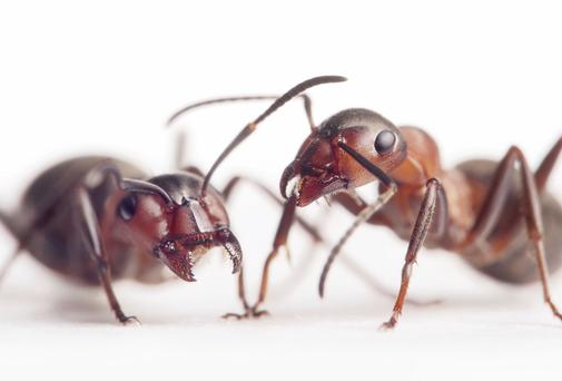 Ants were found in the maternity ward of Galway University Hospital