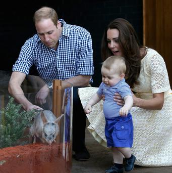 British Royals William and Kate, and Prince George look at a Bilby called George at Taronga Zoo in Sydney