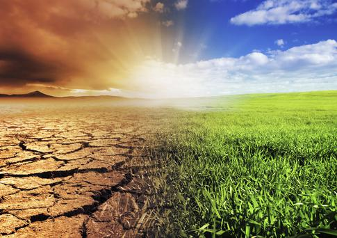 Global warming is the one theme all the essayists tackle
