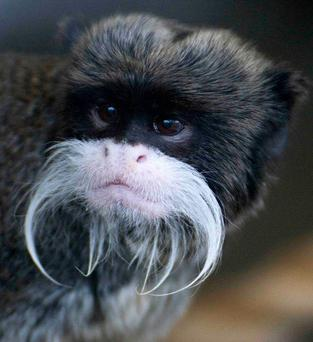 One of five tamarin monkeys that were stolen from Blackpool Zoo