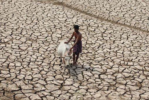 File photo: A villager along with his cow walks through a parched land of a dried pond on a hot day on the outskirts of Bhubaneswar in the eastern Indian state of Odisha May 2, 2014. Reuters/Stringer