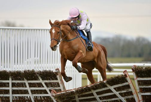 Willie Mullins is responsible for 50pc of the field - including Annie Power - in the season finale at Punchestown this afternoon. Photo: Barry Cregg / SPORTSFILE