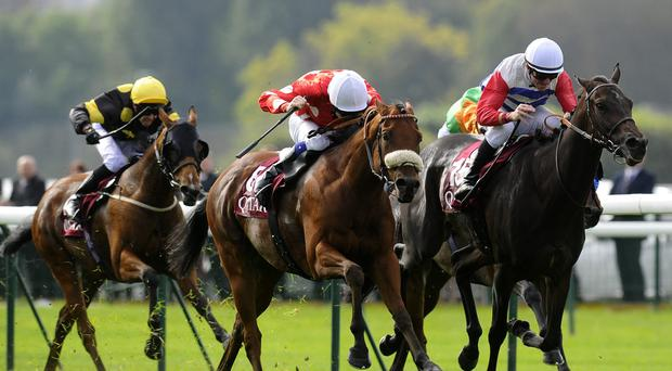 Maarek, here winning at Longchamp last year, will carry top weight at York today. (Photo: Alan Crowhurst/Getty Images