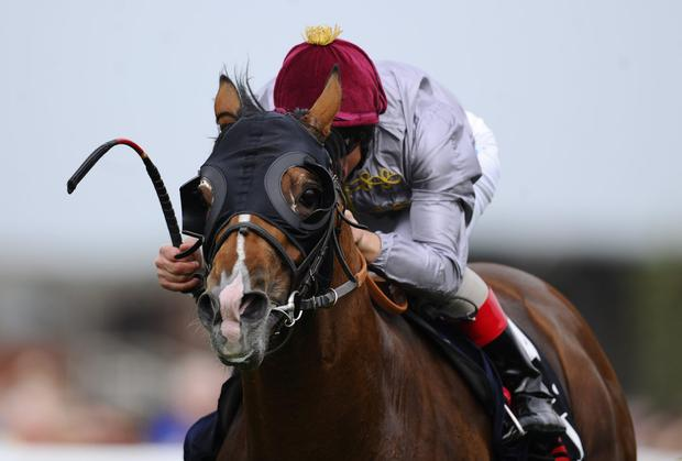 Olympic Glory winll bid to follow up his Newbury win at Longchamp on Sunday. Photo: Alan Crowhurst/Getty Images