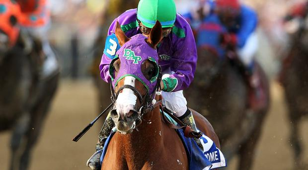 California Chrome - 'a remarkable athlete... he's doing it with ease.' Photo: Matthew Stockman/Getty Images