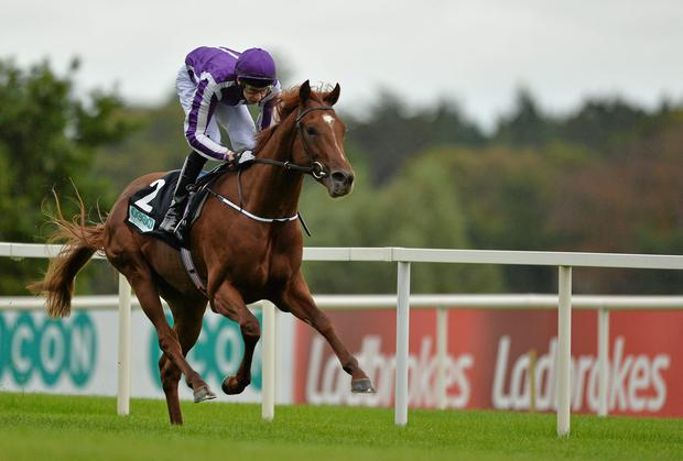 Australia 'wouldn't like the ground to be soft' at Epsom for the Investec Derby, says trainer Aidan O'Brien. Photo: Barry Cregg / SPORTSFILE