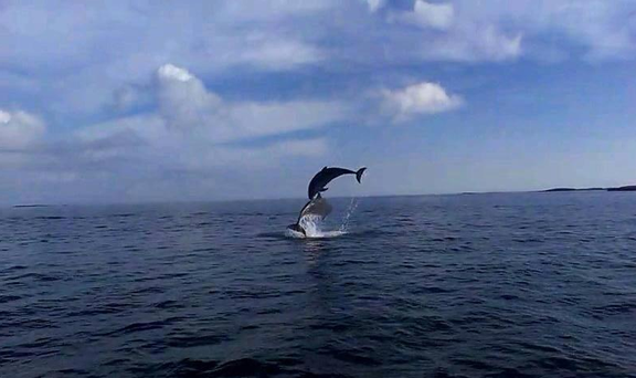 These dolphins were spotted, along with 21 others, off the coast of Galway on Thursday. Photo: Barry O'Malley