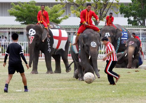 Thai students play soccer with elephants at a school in Thailand's Ayutthaya province June 9, 2014. The match was held as part of a campaign to promote the 2014 World Cup and also to discourage gambling during the competition. REUTERS/Chaiwat Subprasom (THAILAND - Tags: SOCIETY SPORT SOCCER WORLD CUP ANIMALS)