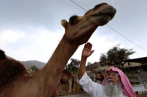 The Middle East Respiratory Syndrome (MERS) virus, which can cause fever, coughing, shortness of breath and pneumonia, is thought to be transmitting into humans from camels, although scientists say human-to-human spread is also taking place. Reuters/Mohamed Alhwaity