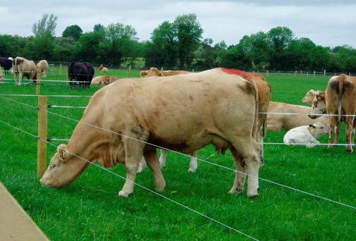 A selection of the stock from the Derrypatrick Herd, Teagasc Grange