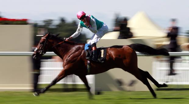 Kingman ridden by James Doyle on their way to victory in The St James's Palace Stakes during Day One of the 2014 Royal Ascot Meeting