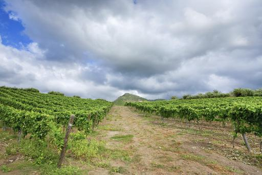 Vineyard in wine region Etna, Sicily - Getty Images.