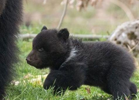 The cub was rejected by its mother and father in tragic circumstances earlier this year