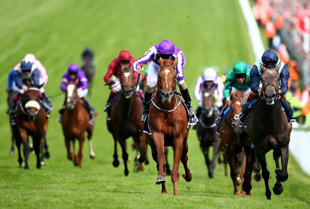 Australia (C) and Joseph O'Brien can confirm their Epsom derby superiority over Kingston Hill at the Curragh