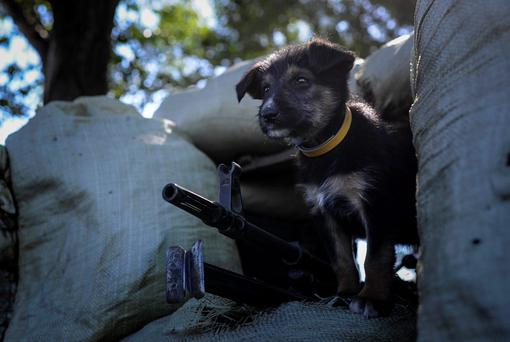 A puppy stands at a Ukrainian checkpoint near Slaviansk in eastern Ukraine.