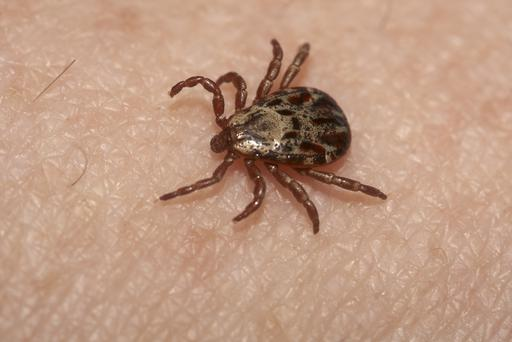 Lyme disease is caused by a bacterial infection carried by a tick.