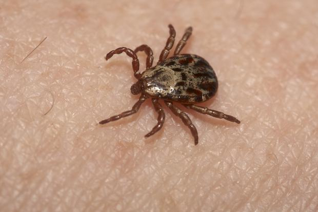 Check skin, hair and warm skin folds especially the neck and scalp of children, for ticks after a day out.
