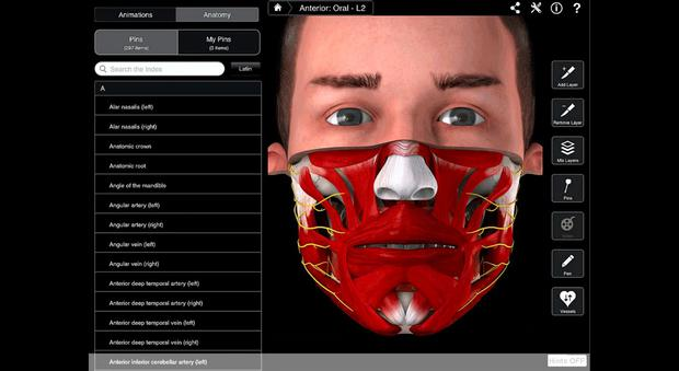 UNDER MY SKIN: The hugely popular 3D4Medical interface
