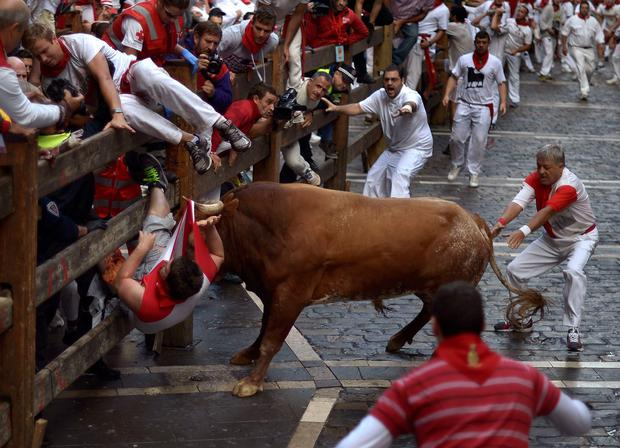 A runner is gored by a Miura fighting bull at Estafeta corner during the eighth running of the bulls of the San Fermin festival in Pamplona July 14, 2014