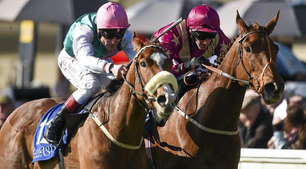 Odeliz, right, was a fine second to Thistle Bird at Epsom in June. Picture credit: Barry Cregg / SPORTSFILE