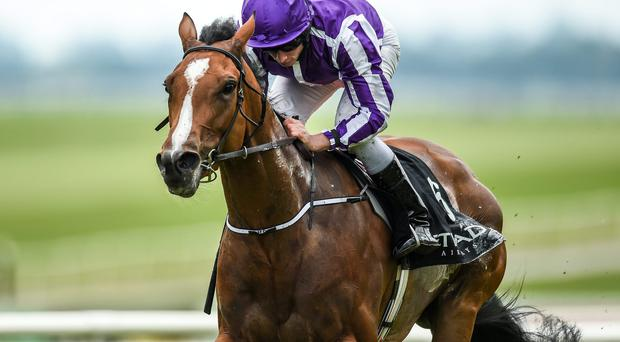Marvellous, with Ryan Moore up, could be the one to back for the Irish Oaks. Photo: Matt Browne / SPORTSFILE