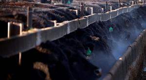 Black Angus bulls are pictured at Tasmania's largest cattle feedlot located at Powranna on the outskirts of Launceston. (REUTERS/David Gray)