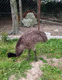The emu is missing from a Carlow pet farm.