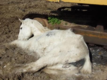 A pony found dead on John Deegan's Wicklow farm