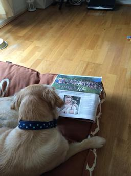 Here's Coco reading the Indo's dog supplement Submitted by Louise Tierney
