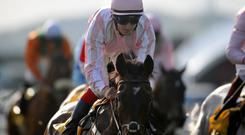Domination looks like it will be hard to beat in Galway's Latin Quarter Chase. Photo: Barry Cronin/PA Wire