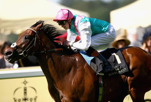 Kingman is expected to take victory in a duel with Toronado in the Qipco Sussex Stakes at Glorious Goodwood. Photo: Charlie Crowhurst/Getty Images for Ascot Racecourse